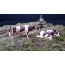 Décors-dioramas, 2 vaches Normandes , bataille de Normandie été 1944
