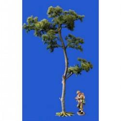 Décor, diorama, grand pin d'Ecosse