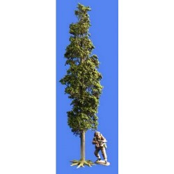 Décors-dioramas, grand peuplier en été